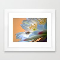 A Delicate Path Framed Art Print