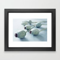 Poppy seed capsule Framed Art Print