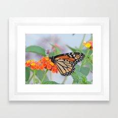The Monarch Has An Angle Framed Art Print