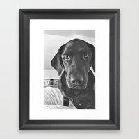 Dog 2 Framed Art Print