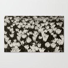 Field of white butterflies  Canvas Print