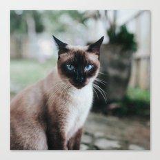Blue-eyed Cat Canvas Print