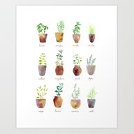 Art Print featuring Culinary Herbs by Sandra Ovono - Water…