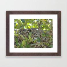 Dove Nest Framed Art Print