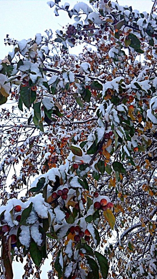 Snow on Fall Leaves Art Print