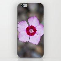 Purple Flower 1 iPhone & iPod Skin
