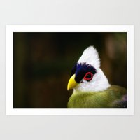 White Crested Turaco Art Print