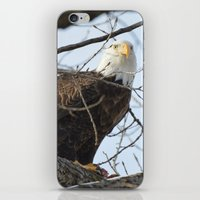 Eagles of Wisconsin 1 - A Wildlife Art Print iPhone & iPod Skin