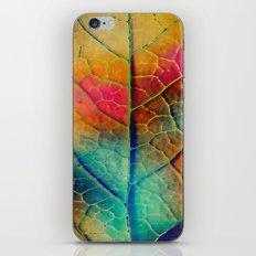 Colored Leaf iPhone & iPod Skin