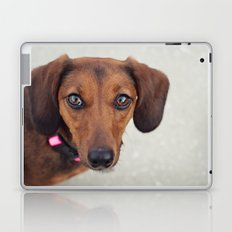 Doxie Dares You  Laptop & iPad Skin