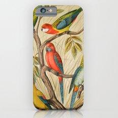 Vintage parrots iPhone 6 Slim Case