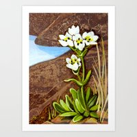 High Country Gentian Flo… Art Print