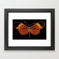 Untitled Butterfly 3 Framed Art Print