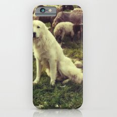 Herding dog, female, south of Israel, scaned sx-70 Polaroid iPhone 6s Slim Case