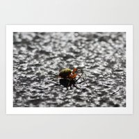 Marbled Orb Weaver Art Print