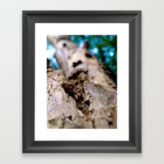 Dying trunk. Framed Art Print