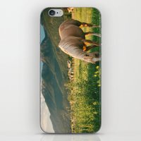Pretty Horse Eating Gras… iPhone & iPod Skin