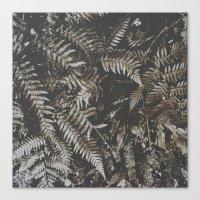 Forest Fern Canvas Print