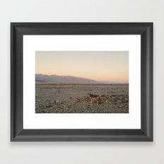 Desert Coyote Framed Art Print