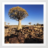 Quiver Trees In Namibia Art Print
