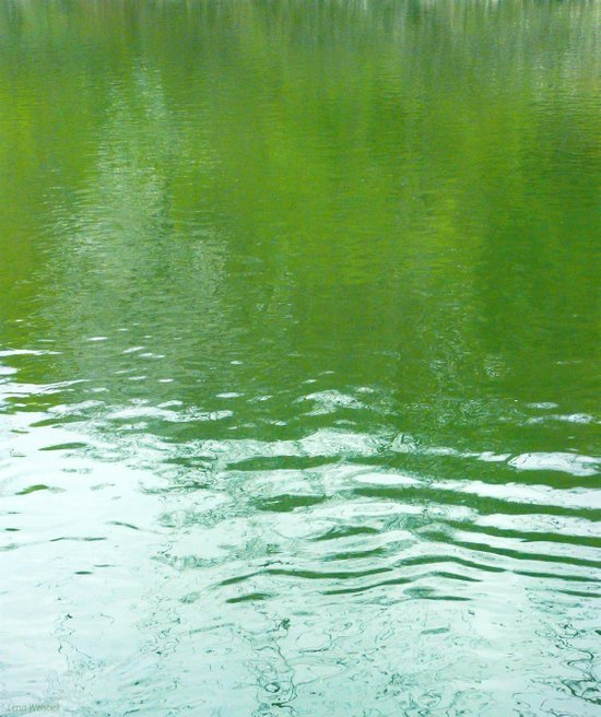 Pond With Green Art Print