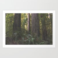 Into the Woods Forest Tree  Art Print
