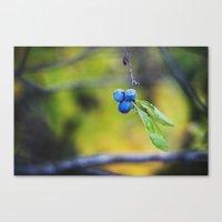 autumn fruit. Canvas Print