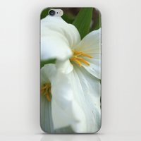 Fleeting Beauties iPhone & iPod Skin