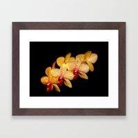 Moth Orchid Framed Art Print