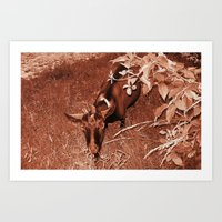 beauty of nature 6 Art Print