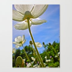 White Tulips & Blue Sky Canvas Print