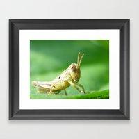 Baby Grasshopper Framed Art Print