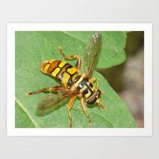 virginia flower fly 2016 III Art Print