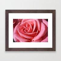 Rose with dewdrops Framed Art Print