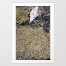 SWAN DIVING Art Print