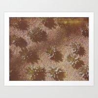 Succulents Caught On Fil… Art Print