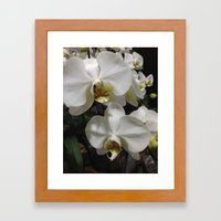 White Orchids Framed Art Print