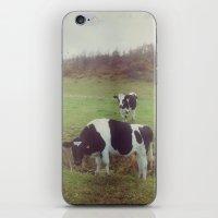 Rustic Cows iPhone & iPod Skin