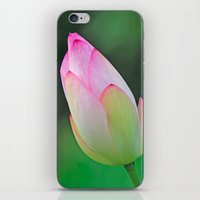 Pink Water Lily iPhone & iPod Skin