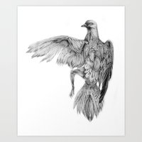 Pigeon Dissection Art Print