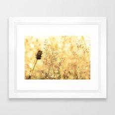 Blazing Meadow Framed Art Print