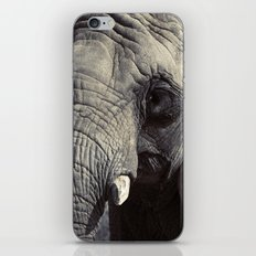 ELEPHANT OH MY! iPhone & iPod Skin