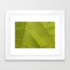 Fig Leaf Framed Art Print