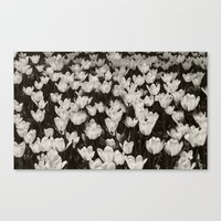 Field of white butterflies  Canvas Print
