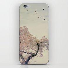 Spring 02 iPhone & iPod Skin
