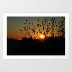 sunset & flowers Art Print