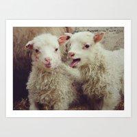 Sheep #4 Art Print