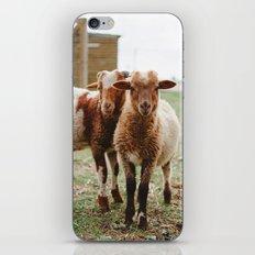 Counting Sheep iPhone & iPod Skin