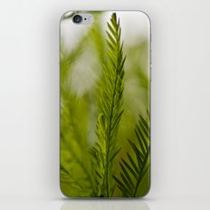 Delicate green fronds iPhone & iPod Skin