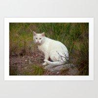 Wild White Cat 435 Art Print